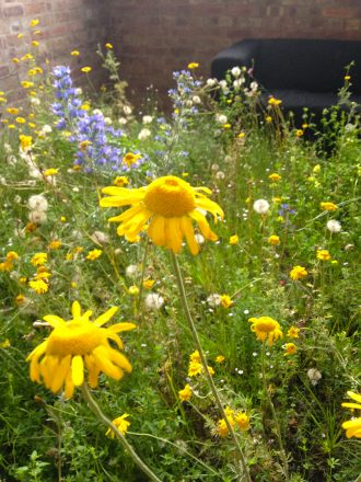 wildflower meadow plants, environmental art installation